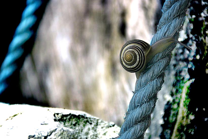 Slak op blauw touw